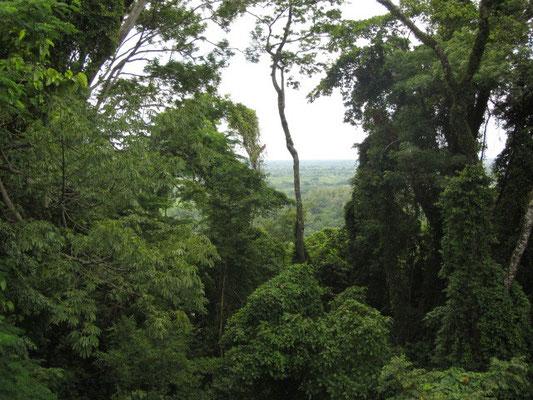 Satter Dschungel.