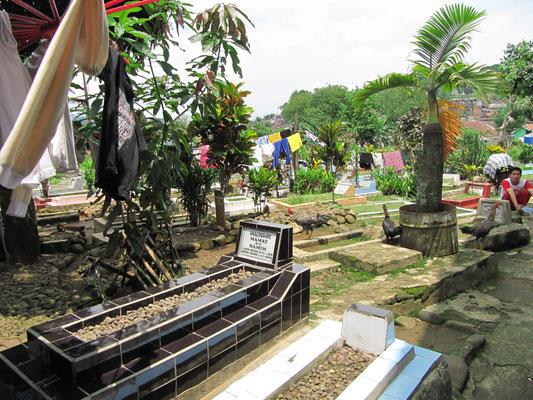 Der Friedhof des kleinen Mikrokosmos.