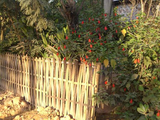 Gartenzaun.