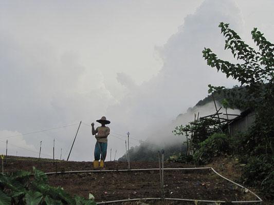 Feldarbeit in Nebelschwaden.