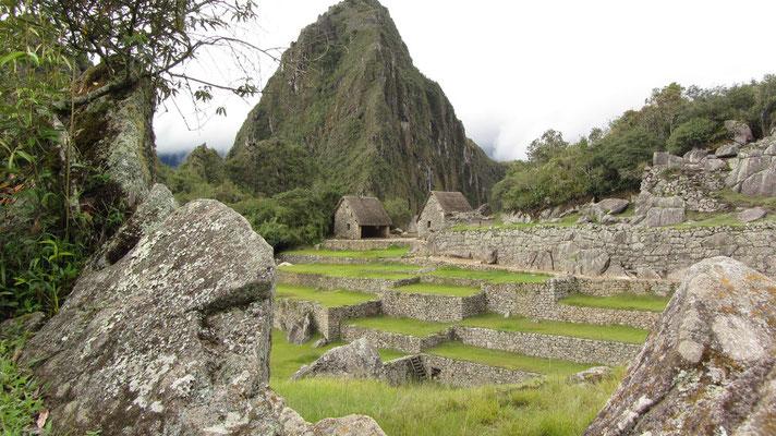 Blick auf den Huayna Picchu (2701 m). Wer gern klettert kann extra zahlen und muss sich dafür registrieren, da nur 400 Personen pro Tag der Aufstieg erlaubt wird.