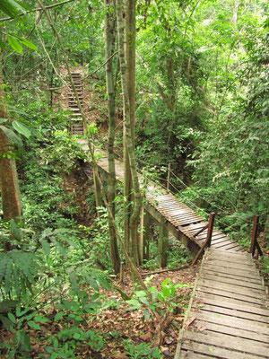 Jungle-Trail. Manchmal waren wir sehr dankbar, wenn ein Teil des Pfades auch für Nicht-Bergsteiger zugänglich gemacht war.
