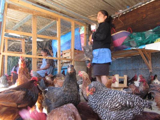 Truthähne sind beliebt auf Chiapas Speisekarten.