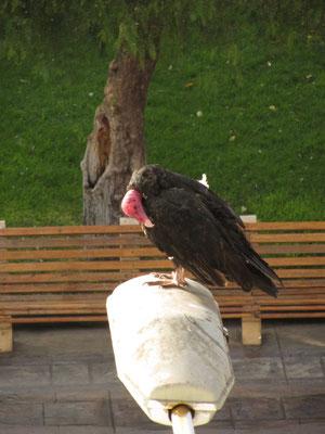 Hässlicher Vogel.