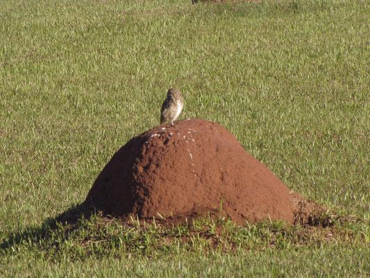 Vogel auf dem Hügel.