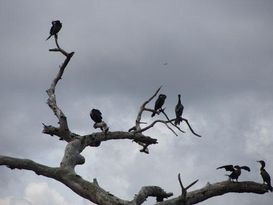 Flugtiergruppe 2.
