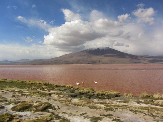 """Die Laguna Colorada ist ein flacher (durchschnittlich 0,5 m und am tiefsten Punkt 1,5 m tief), 60 km² großer See im Reserva Nacional de Fauna Andina Eduardo Abaroa, dem Nationalpark Tierwelt der Anden """"Eduardo Avaroa""""."""