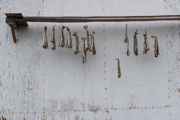 Séchage du poisson-Kulusuk