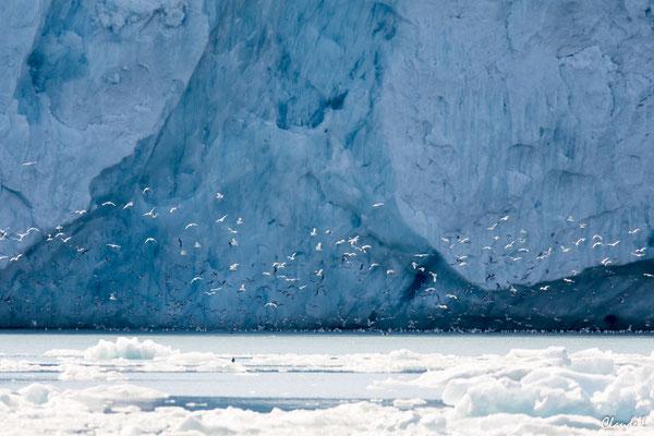 Glacier Smeerenburg, Spitzberg, Svalbard