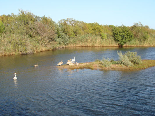 Les étangs de Villepey