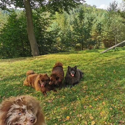 Valentin, Duplo, Hanuta und Peggy Sue