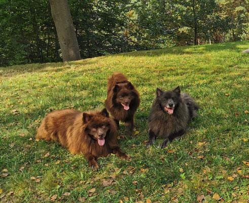 Duplo, Hanuta & Peggy Sue