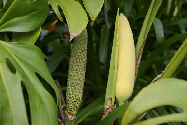 Ananasbanane