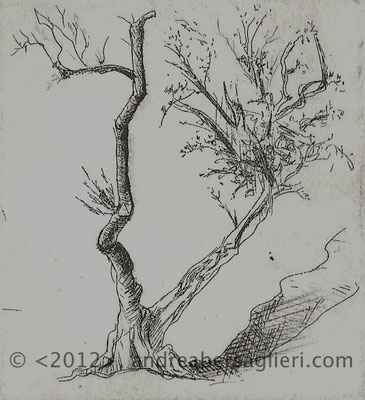 "Olive Tree VII, 3x3"" Drypoint and Etching"