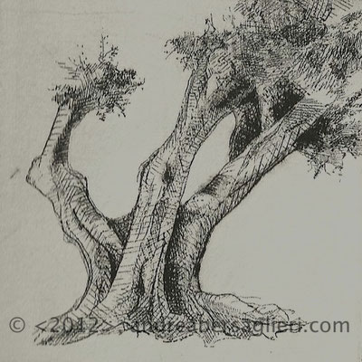 "Olive Tree XII, 3x3"" Drypoint and Etching"