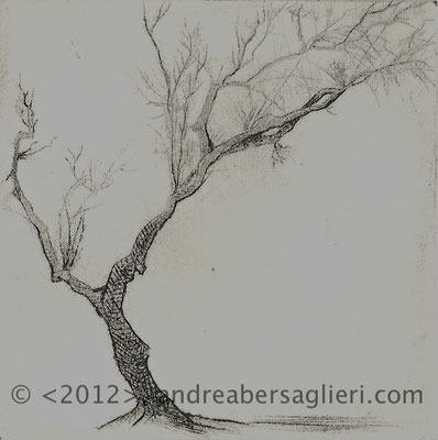 "Olive Tree X, 3x3"" Drypoint and Etching"