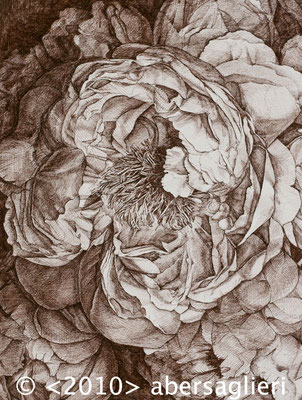 "Peony, ink on paper, 12""x16"" 2009"