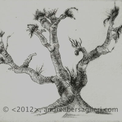 "Olive Tree IV, 3x3"" Drypoint and Etching"