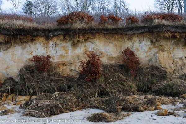 Steilküstenabbruch im Bereich Rosenort