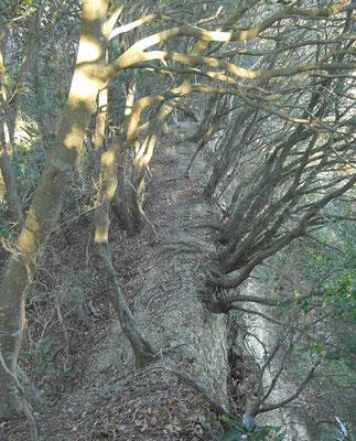 尾根のトップ 左右30~50mの谷