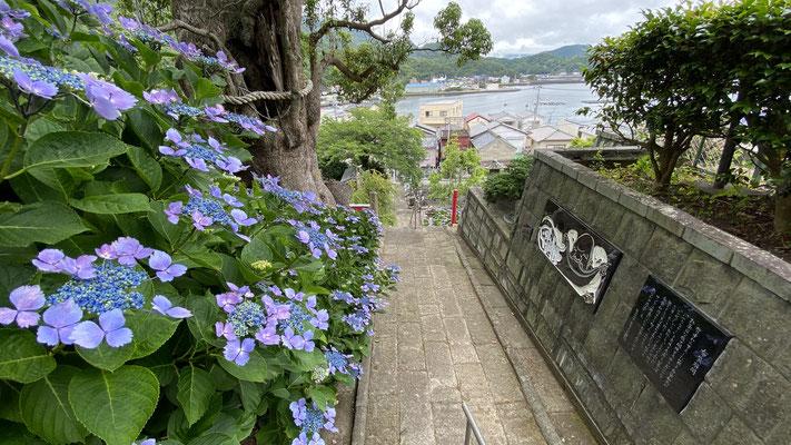 紫陽花 あじさい(5月下旬~6月中旬) 石段