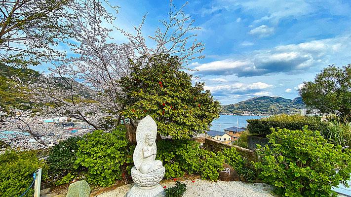 境内の桜 観音様 江浦湾