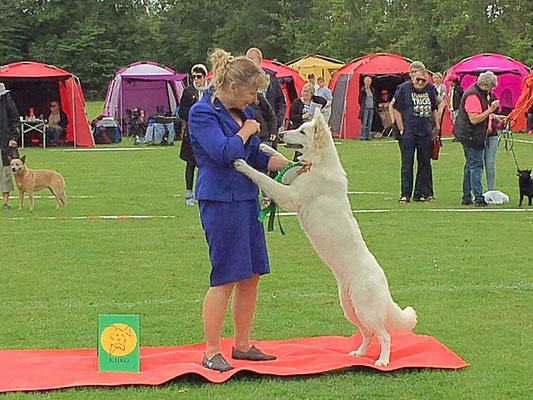 Kennel Augusteas ABBA. BIS 4 Junior Handlet by owner Ulla Warden