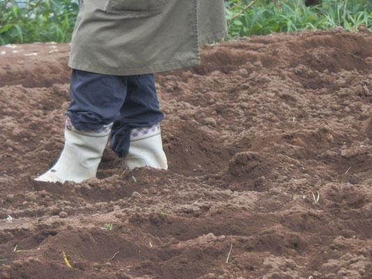 蒔いた種に3~5センチの土をかぶせています