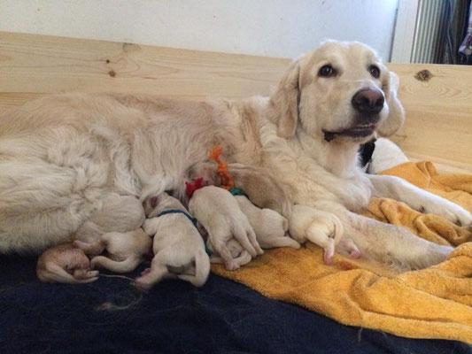 alle 10 kurz nach der Geburt und Mama Violet müde und zufrieden