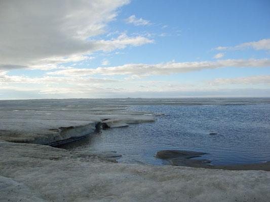 Берег Карского моря, середина июня.