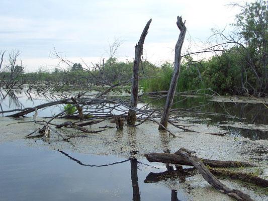 Затопленный участок при русле реки Нерская. Виноградовская (Фаустовская) пойма.
