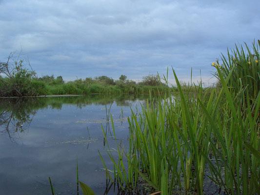 Естественное русло реки Нерская в низовьях. Виноградовская (Фаустовская) пойма.