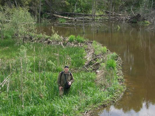 Бобровая плотина на реке длиной около 60 м. Перепад воды около 1,6 м.