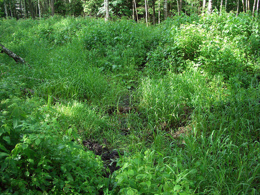 Тропа пятнистых оленей. Одна из бесчисленных, ведущих через торфяники.