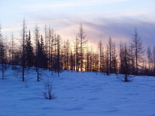 Лесотундра Южного Ямала близ Оби, конец марта.