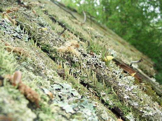Лишайники оккупировали дощатую крышу старого колодца.
