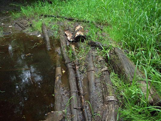 Брод через небольшой ручей, протекающий по высокоствольному смешанному лесу в болотистых берегах.