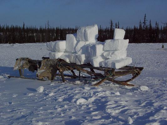 Нарты с кусками напиленного снега для питьевой воды, Ямал.
