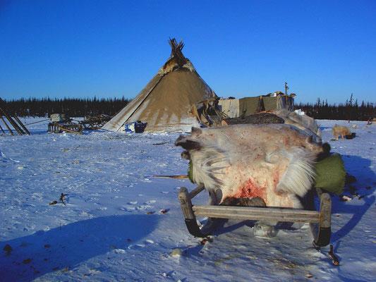 Стойбище ненцев, Южный Ямал.