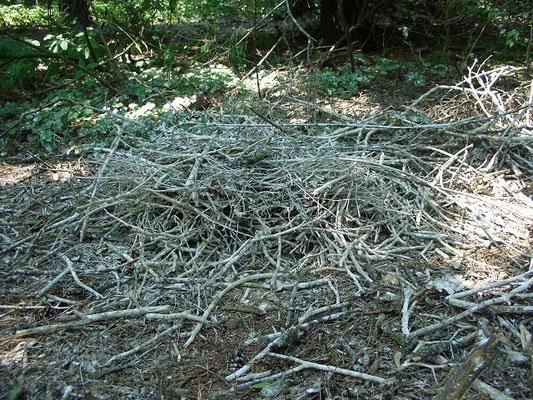 Упавшее на землю гнездо серой цапли, видимо, сброшенное ветром.