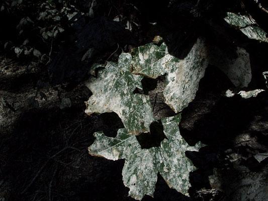 Все листья и травянистые растения покрыты помётом цапель и медленно погибают.