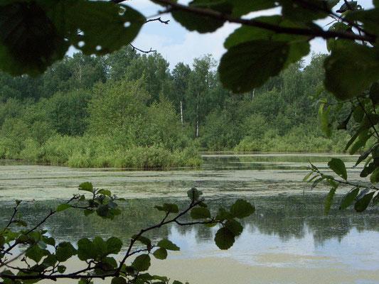 Торфяные озёра - свидетельство давней добычи торфа. Сегодня это идеальное место для гнездования многих видов водоплавающих птиц.