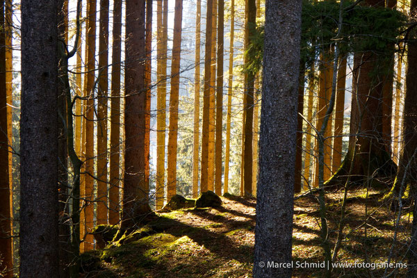 Waldlicht, Eigenthal, Schweiz