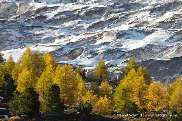 Goldener Aletschwald am grossen Aletschgletscher, Wallis