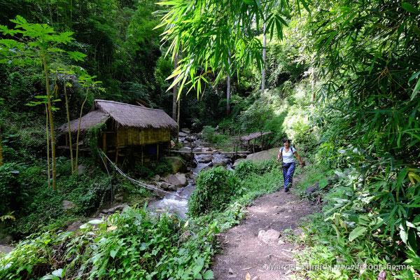 Trecking im thailändischen Tropenwald