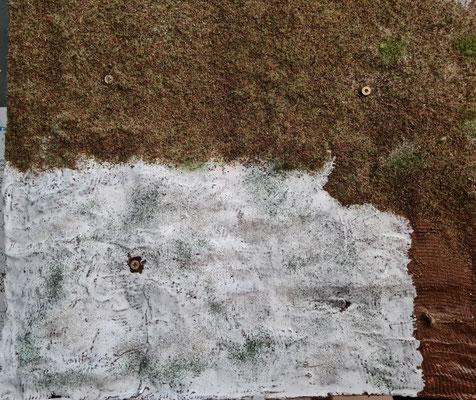 Etwas Sand aufgeträufelt und erstes Grün