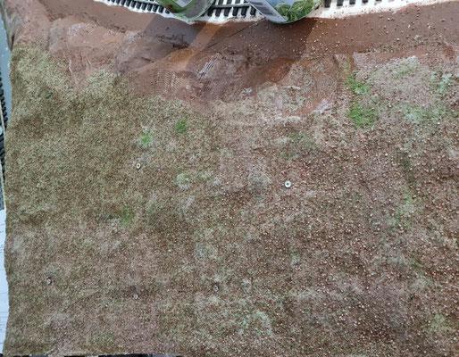 Der Sand- und Waldboden zieht ein