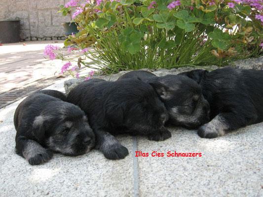 cachorrros en la hierba
