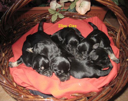 cachorros en una cesta roja