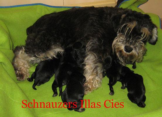 cachorros con su madre